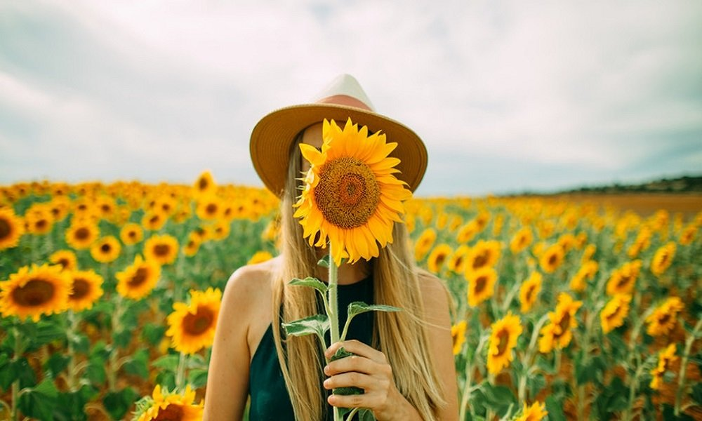 Go on a sunflower field photo shoot
